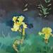 'Yellow Irises', 40x40cm, OIl on board