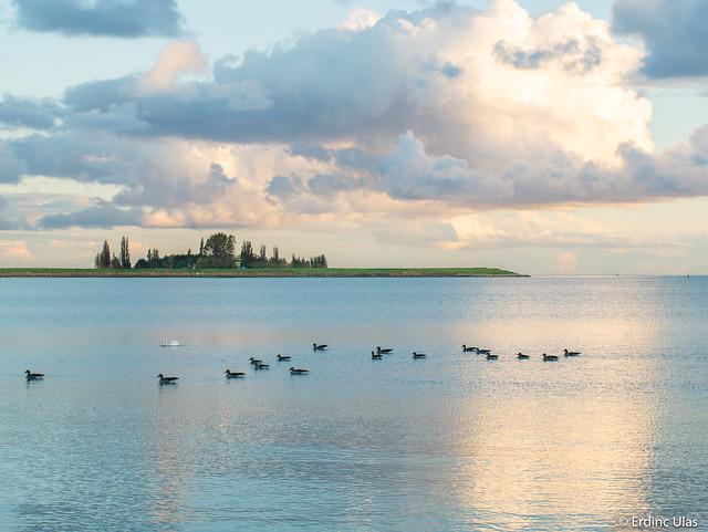 Peaceful landscape