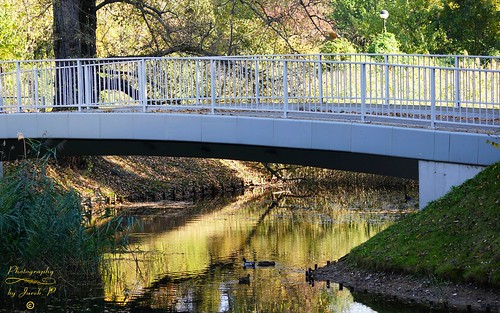 citypark kępapotocka park warsaw warszawa poland polska capitalcity water bridge birds autumn reflections jurekp sonya77