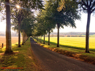 The Avenue at Crichel | by TDR Photographic