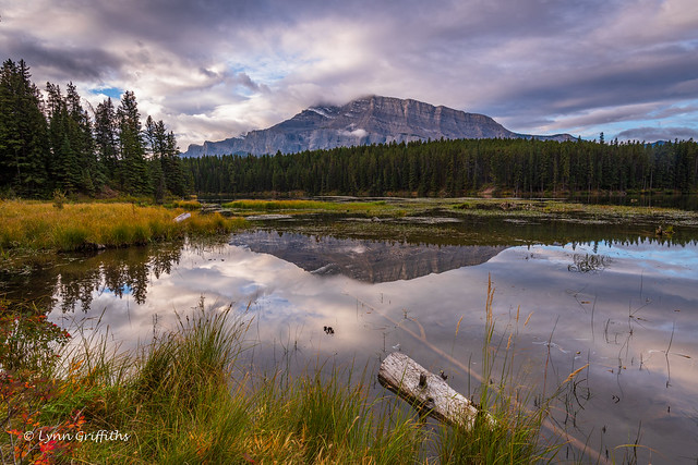 Just after sunrise near Two Jack Lake D85_4857.jpg