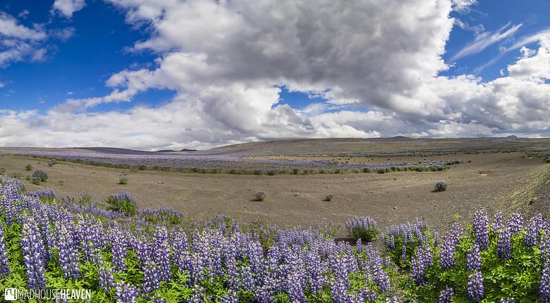 Iceland - 2081-Pano