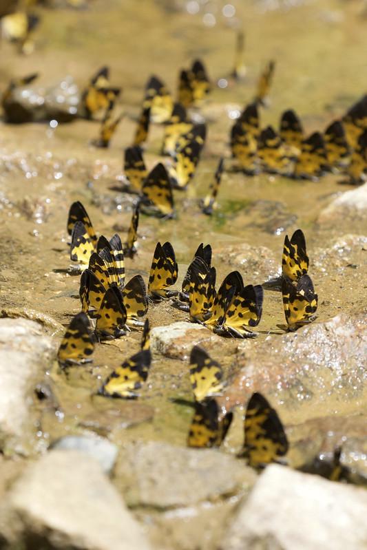 Butterflies 199A6600