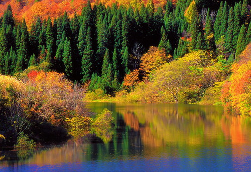 river colors crisp big tadami sunlight sunset red lovely clear water outdoor mountain leaving season landscape seasonal overwhelming strong beautiful moment happiness blessed awe creature autumn stream flow finally forest upstream charmed repeatedly naturallight freely