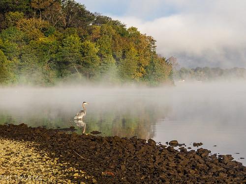 oldhickorylake tennessee wilsoncounty foggy sunrise oldhickory unitedstates us