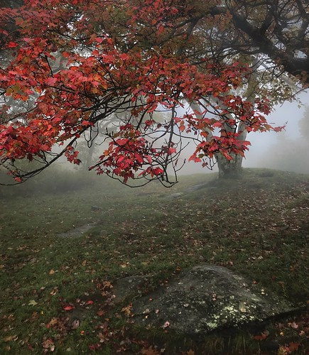 tree mood foggy fog wachusettmountainstatereservation mountwachusett