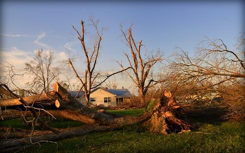 hurricanemichael damage trees pecantrees hurricanedamage altha fl