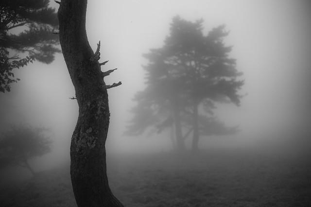 walk in the fog 5