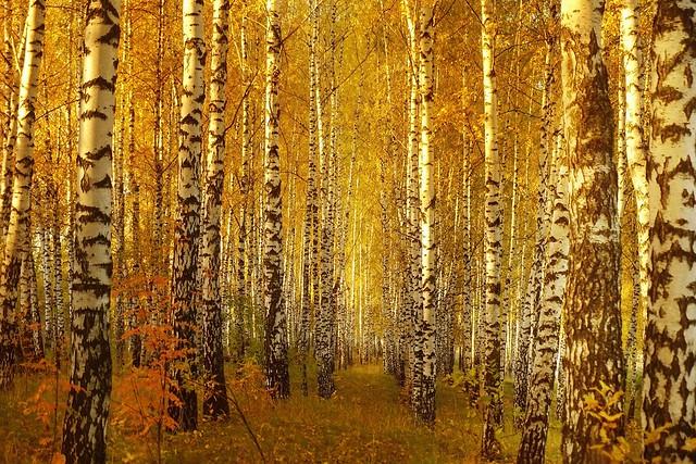 Autumn. Forest