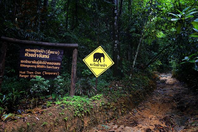 Beware of Wild Elephants