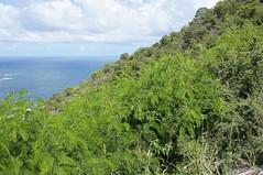 Seeschlacht von St. Kitts