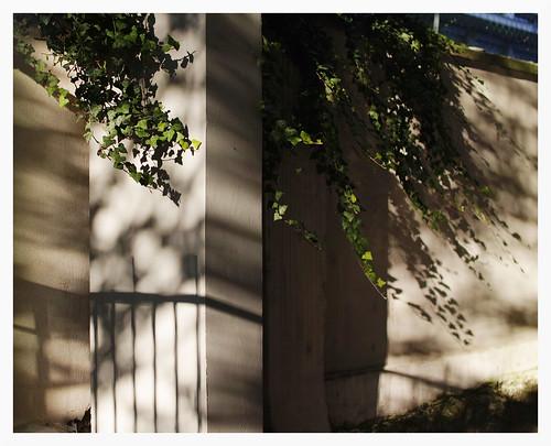 Herbs,  Shadows and Wall