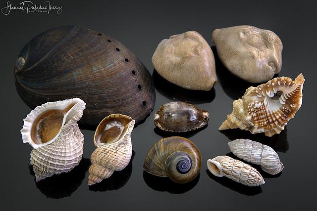Worldwide shells