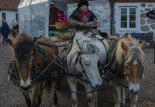 Carriage horses at Fredriksdal