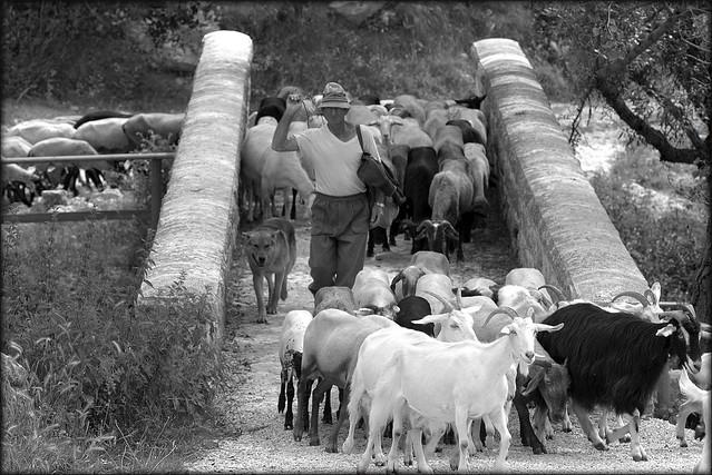 Pastore di capre,  Matese.