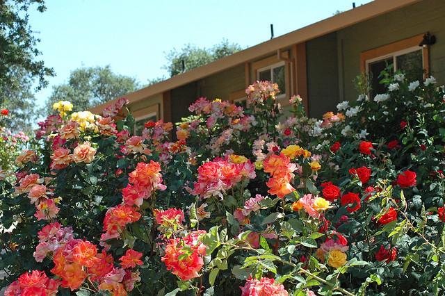Gayles Garden