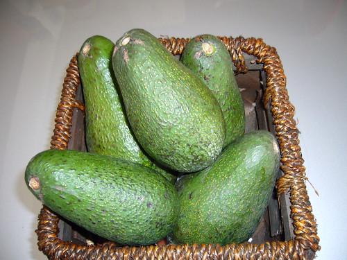 Avocado | by Matangaguila