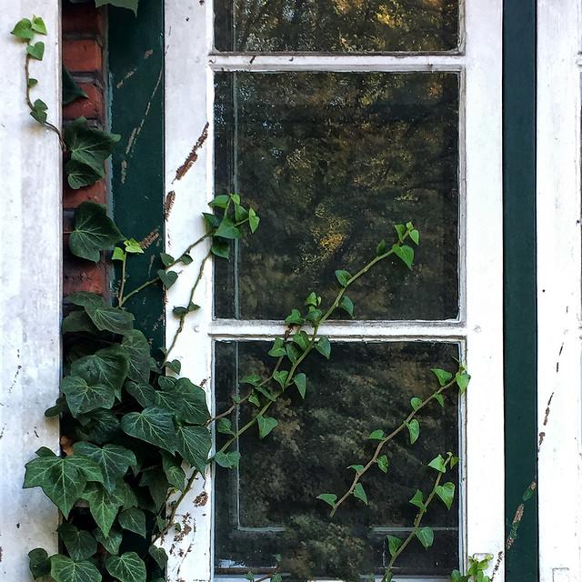 leaves on the window