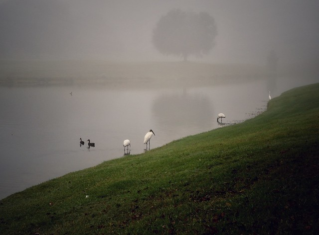 Misty Morning. Orange Park, Florida