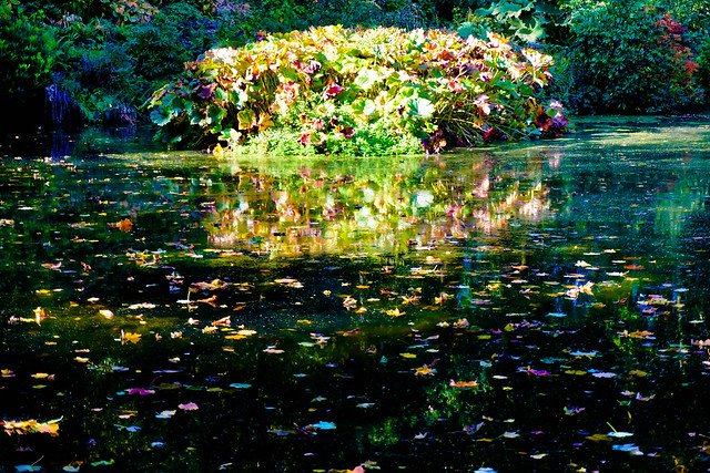 Foliage in a pond