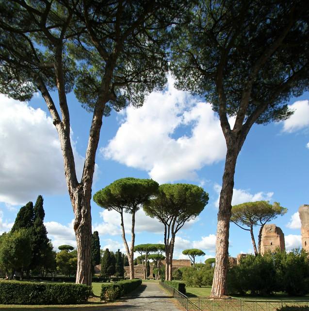 Italian Stone Pines: The Baths of Caracalla
