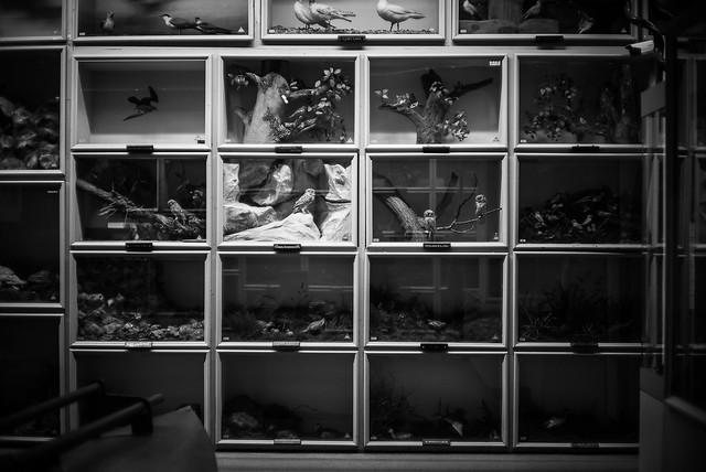 Booth Museum, Brighton