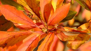 Autumn in the Colzium 07 | by byronv2