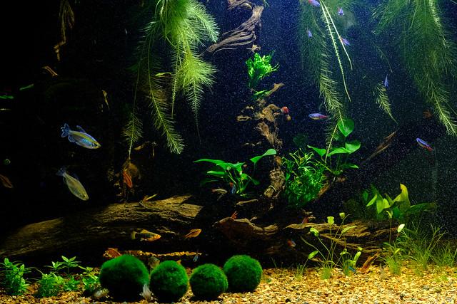 Aquarium 7375