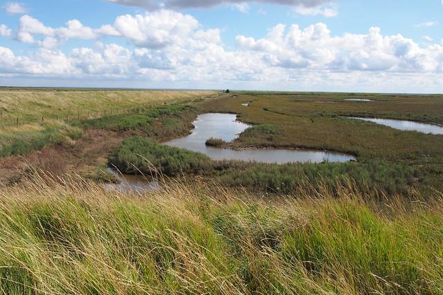 Marshes near Leverton