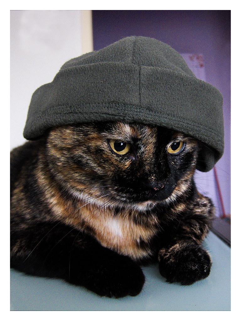 Il Gatto Con Il Cappellothe Cat In The Hat Per La Stagion Flickr