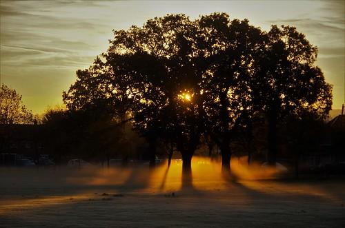 mist morning dawn sunrise sun shine light shadows trees nature pentaxart pentax art sundorne shrewsbury shropshire