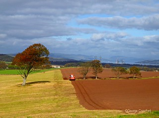 Ploughing Near Squinty Tree1