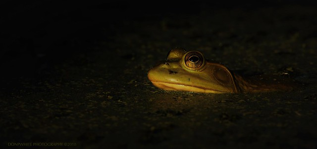 light frog shadow