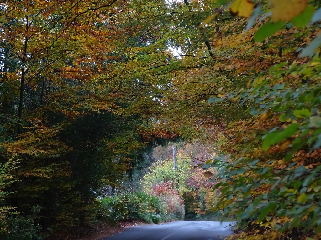 Wicklow & Carlow Autumn Trees October 2018