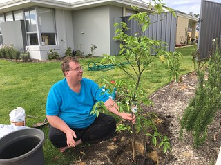 Mike Transplanting His Grapefruit Tree from Perth | by Miss Shari