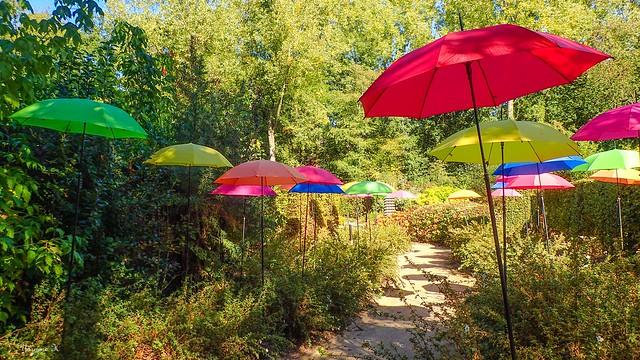 Parapluies - 5965