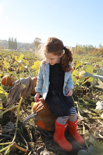 20181013 pumpkin patch12   by schnell foto