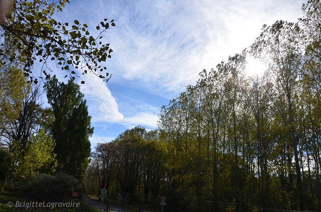 Contre-jour d'automne