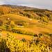 Herbst_Stalten_072