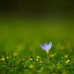 flower 1706