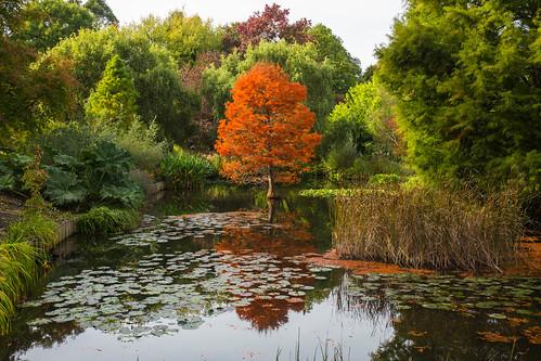 garden hampshire hilliers romsey braishfield england unitedkingdom gb