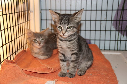 Cats and Kittens at Crafty Cat Rescue (Ann Arbor, Michigan) - Wednesday October 17th, 2018 | by cseeman