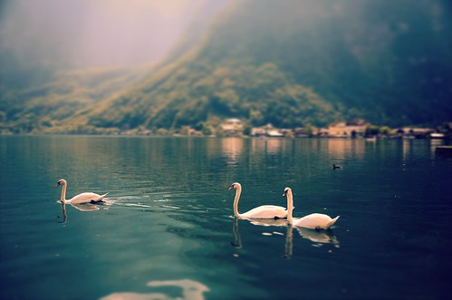 landscape view mountains alps lake water animals birds swan beautiful light colors details outdoors nature reflection travel visit explore discover destination hallstatt hallstattersee salzburgerland salzkammergut austria oberöstereich europe photography hobby