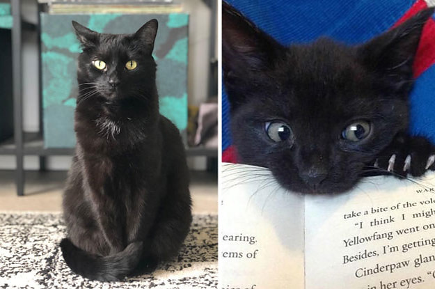 17-reasons-you-should-never-adopt-a-black-cat-2-27158-1534168375-0_dblbig