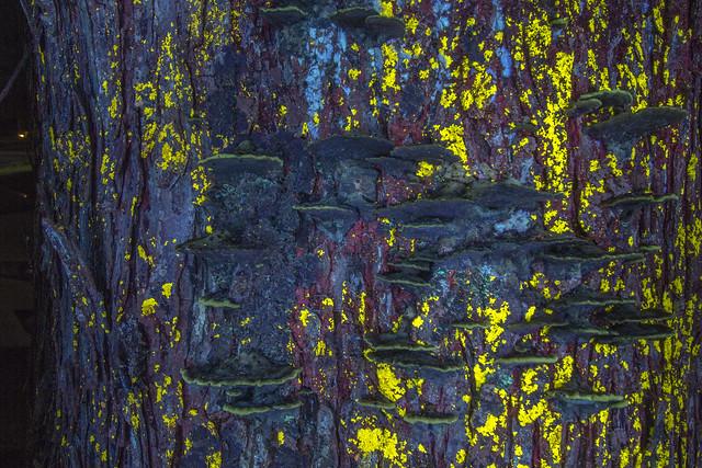 Lichen and fungii, longwave light 2