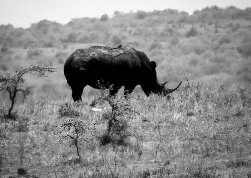 sony dsc100hxv cybershot wildlife animals nature nationalpark nairobi kenya