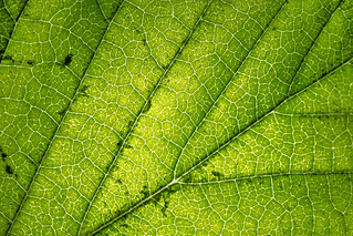 Leaf 2 | by Manns Woodland Perspective