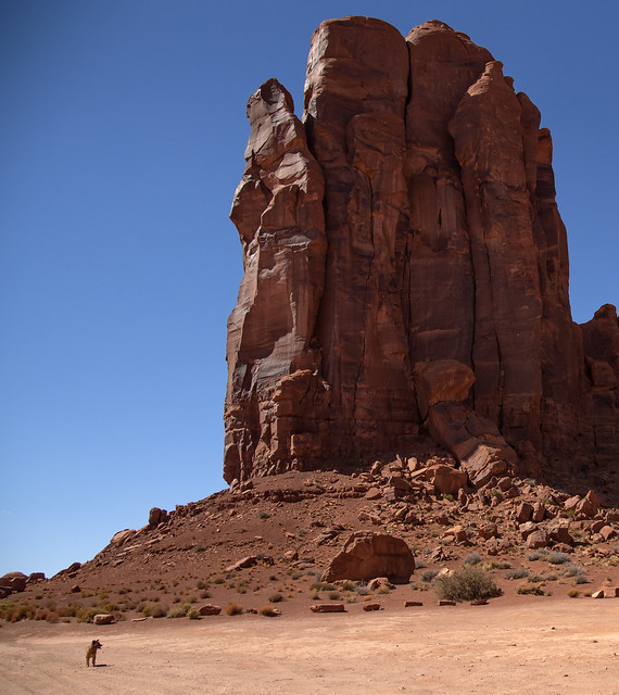 Dog & Monument Valley