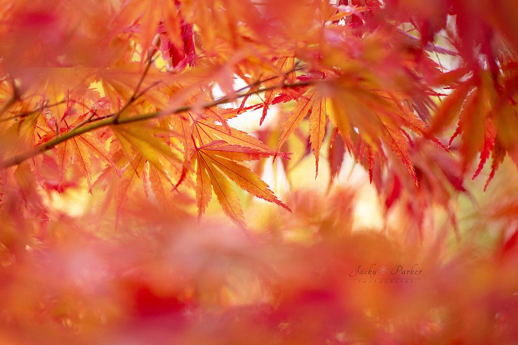Autumn Fire Wwwjackyparkercom Facebook Jacky Parker Flickr
