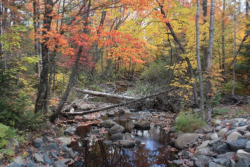 flumeridge newbrunswick canada creek stream water trees leaves fall foliage
